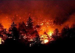 Nell'immagine alberi e cespugli in fiamme.