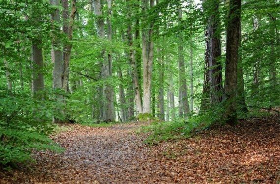 Une forêt au printemps avec un sous-sol sec