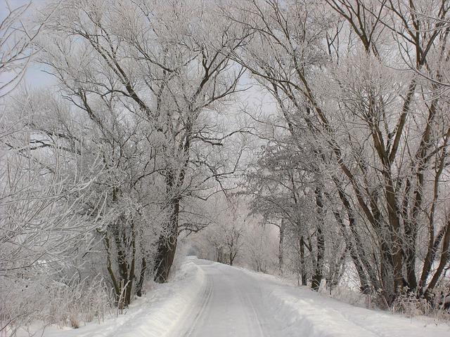 Das Bild zeigt eine Strasse, die durch einen Wald führt. Die Bäume sowie die Strasse sind schneebedeckt.