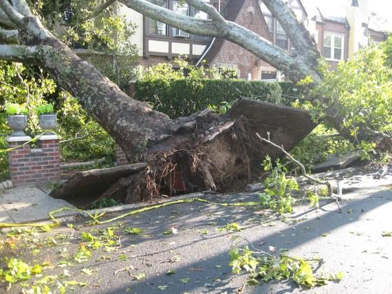 Manto stradale danneggiato da un albero divelto dalla tempesta.